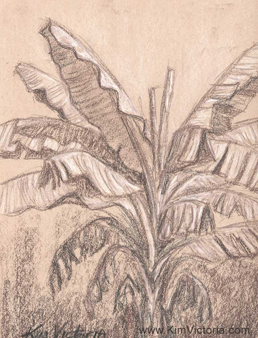 Banana Tree drawing  by Kim Victoria